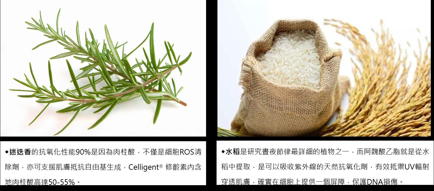 迷迭香&水稻